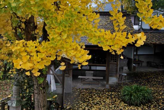 2009.11.17-1.JPG
